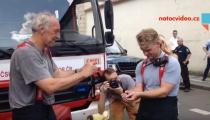 DRAMA V CENTRU PRAHY. Na záchraně kačenek se podíleli policisté i hasiči